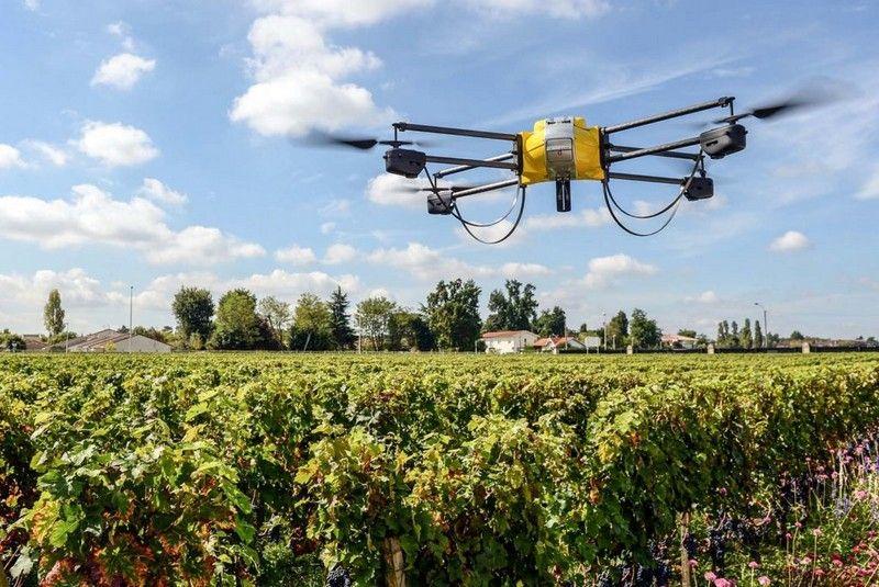 Drone su vigna