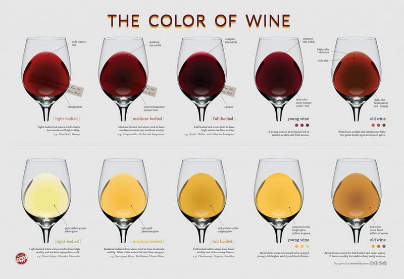 Infografica sul colore dei vini