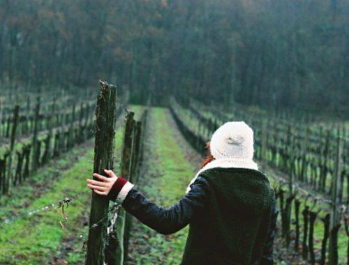paesaggio vinicolo