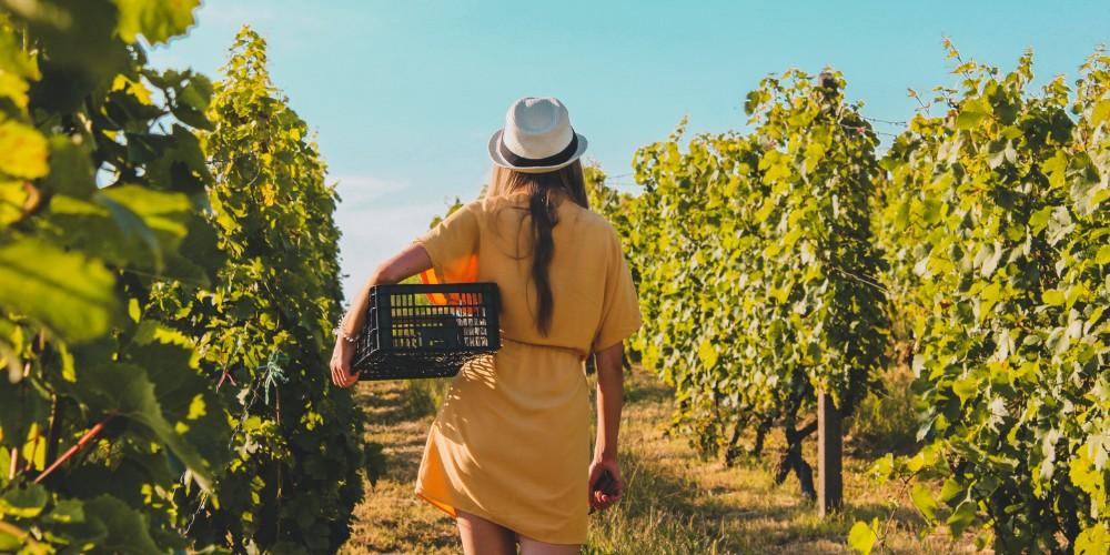 Esperienze del vino